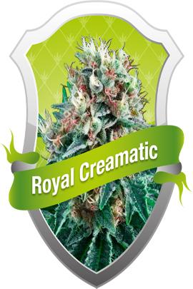 Royal Creamatic Auto Canna Seed Cannabis Seeds
