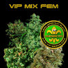 VIP Female Mix