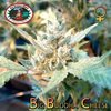 Big Buddha Cheese x Cheese Reversed