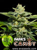 Papas Candy fem