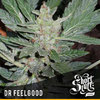 Dr Feelgood reg auto
